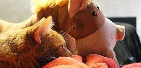 Le chat Léo et la mascotte cheval Jéricho pour la newsletter du site de Cloé Perrotin