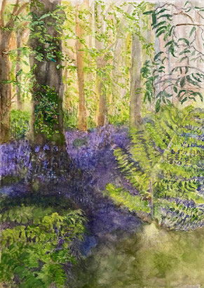 By Christine Rawlings The Bluebell Wood