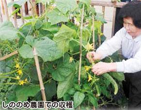 デイサービスしののめ 食に安心を しののめ農園での収穫