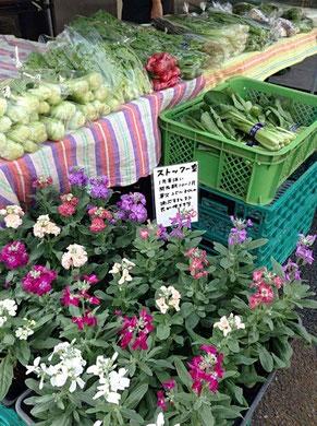 直売会にはお花の販売もあり、こちらも楽しめる。