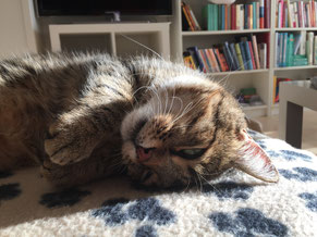 Macho's sunday snooze
