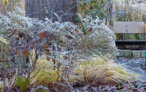 Im Winter wechselt der Baltthorst seine Farbe in goldgelb