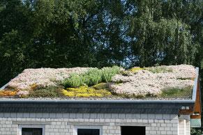 Haus mit Pflanzen auf dem Dach