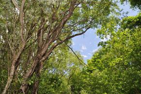 Bachblüten, Ätherische Öle bei Irmgard Energetik in Golling an der Salzach