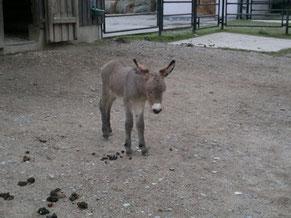 Mr. Tom (damals Gerhard) im Tierpark als Eselfohlen - soooo süß :-)
