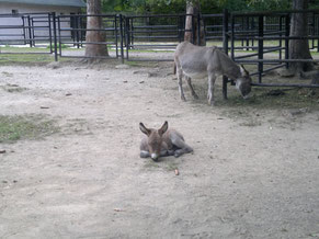 Mr. Tom (damals Gerhard) im Tierpark als Eselfohlen :-)