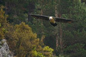 Conférence sur la faune sauvage des Pyrénées
