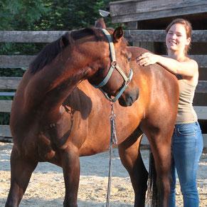 Therapeutin am Pferd, Pferdeosteopathie,Pferdephysiotherapie, Rani Tiertherapie, Rani Pauly