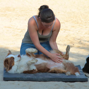 Therapeutin am Hund, Hundeosteopathie, Hundephysiotherapie, Rani Tiertherapie, Rani Pauly