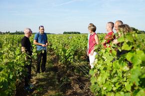 VinoLoire - Vincent Delaby - Excursions privilégiées dans les domaines vignobles du Val de Loire - Vignes, vélo et patrimoine