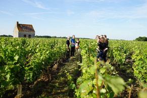 VinoLoire - Vincent Delaby - Excursions privilégiées dans les domaines vignobles du Val de Loire - Visites découverte de Vigne en Cave
