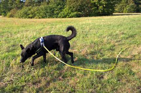 Nimm´s mit- für das Image unserer Hunde. HundeAppGO, Hundephysiotherapie Heike Amthor