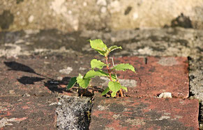 使い勝手が悪いお庭の改善