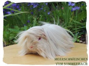 Methusalix vom Sommerbach