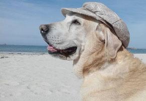 Un chien golden blanc avec une casquette sur la tête au bord de la plage par coach canin 16 dressage chien angoulême
