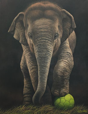 Junger Elefant mit Fussball