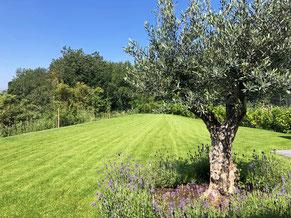 <olivenbaum> <hausverkauf> <suche Haus in Kruft>
