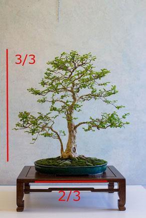 Il vaso dovebbe essere 2/3 dell'altezza della pianta