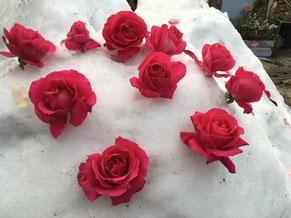 冬 ガーデン 雪 広島