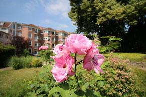 Seniorenhaus Lindenhof | Grevenbroich