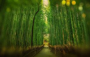 Wald, Bäume, Anpassungsfähigkeit, Gelassenheit