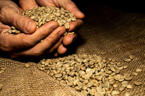 Rohbohnen Spezialitätenkaffee