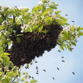 pestizidfreies Bio-Bienenwachs für Bienenwachstuch