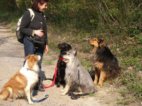 Hundetrainerin Wanda mit Shandor, Loulou, Bilbo und Sultan