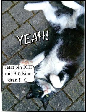 ~ Bild: Felix - Blödsinn ☺☻ ~