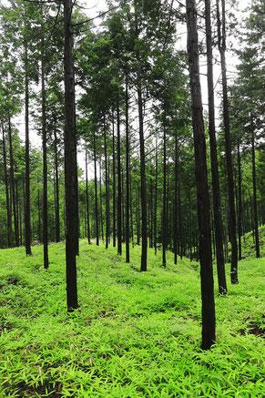 豊かな自然が美しい東白川村