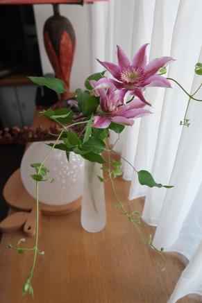 お庭に咲いたから、と「テッセン」のお花をいただきました。