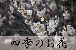 四季のお花のページへ