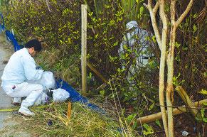 防風林の手入れをする参加者。大量の不法投棄に驚きの声も=長間地区防風林植栽現場、大川