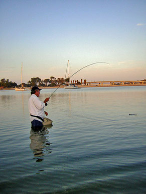 Summer wading and fly fishing Mission Bay, San Diego