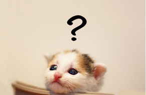 手元供養とは?を表すクエスチョンマークを浮かべる子猫の写真