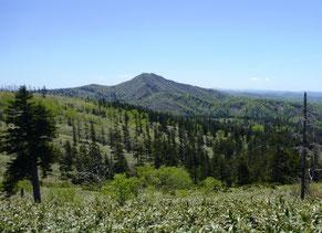 パンケ山とアカエゾマツ林