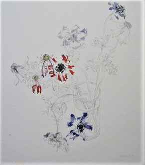 Wilted Anemones 萎れたアネモネ,モナーク ( Pencil drawing, Watercolor painting, Dessin)