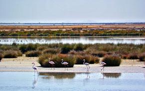 Humedales del Parque Nacional de Doñana. /  © Dospunto zero