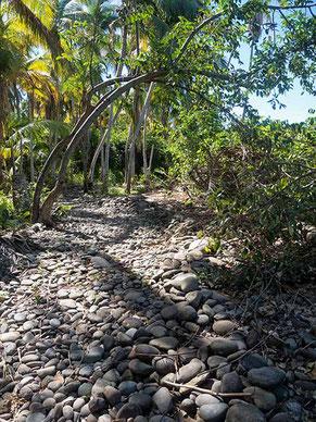 Chemin de randonnée Vx-Habitants - Guadeloupe