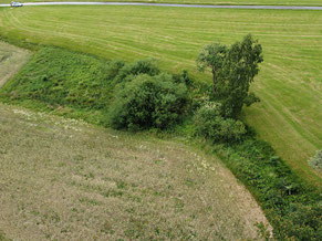 Foto: Lothar Herzig, Biotop Feuchtgebiet Dornhecke Eichborn