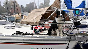 un chien border collie assis à l'avant d'un bateau par coach canin 16 educateur canin en charente