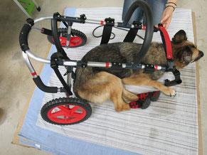 犬の車いす 大型犬用車椅子 犬歩行器 dogkart 車椅子犬 クララワークス