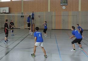 Die tapfer kämpfenden SC-Volleys