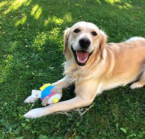 Wir erstellen Ihnen einen kostenlosen Futterplan für Ihren Hund und erklären Ihnen gern, worauf es wirklich beim Hundefutter ankommt.