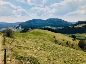 Schwarzwaldweide beim Abstieg auf dem Bernauer Hochtalsteig.