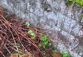 Schnecke, Gartenabfall, Mauer