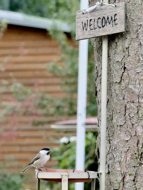 Sumpfmeise_Vogelbeobachtung Mecklenburg