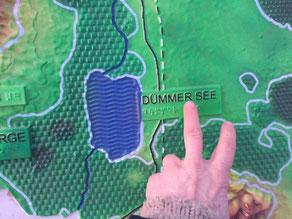 Eine Hand streift über das Tastmodell der Dümmer-Region, links von der Hand befindet sich der Dümmer-See.