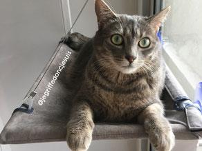 hamac fenêtre pour chat