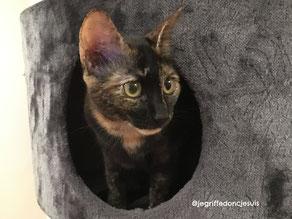 comportementaliste chat chaton Paris